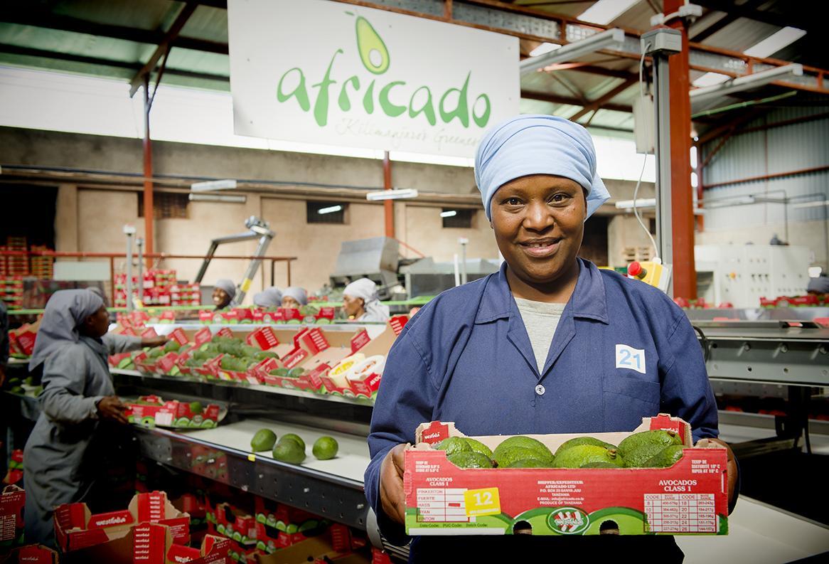 Africado - vastuullista avokadojen kasvatusta Tansaniassa