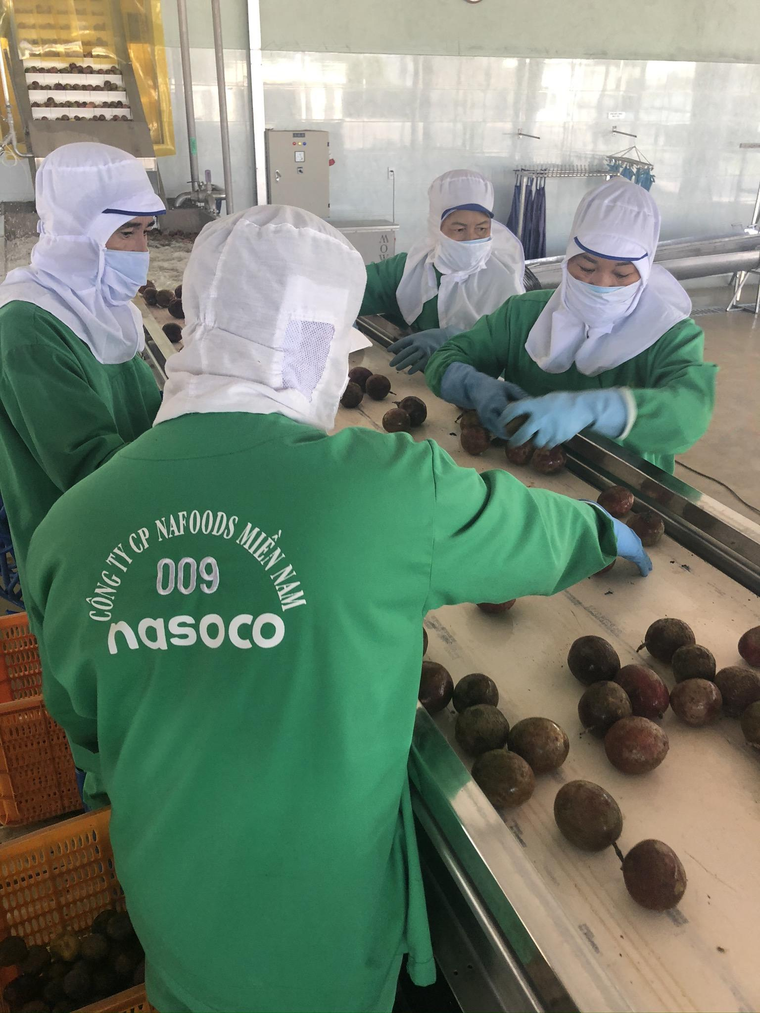 Employees handling fruit in the factory