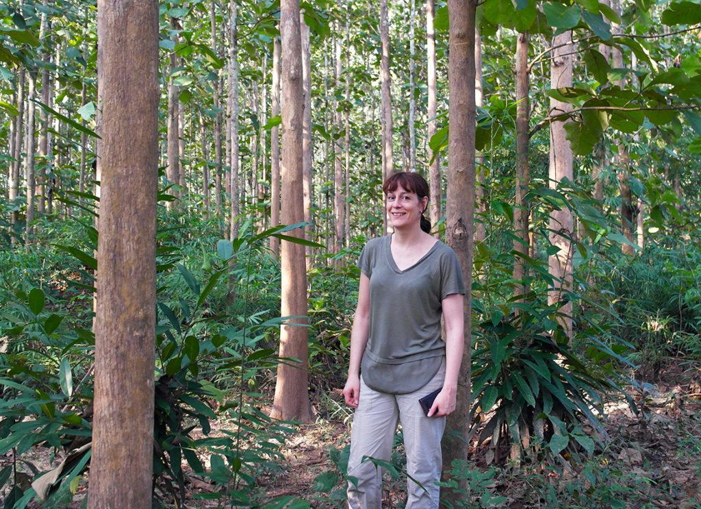 Anne Arvola forest